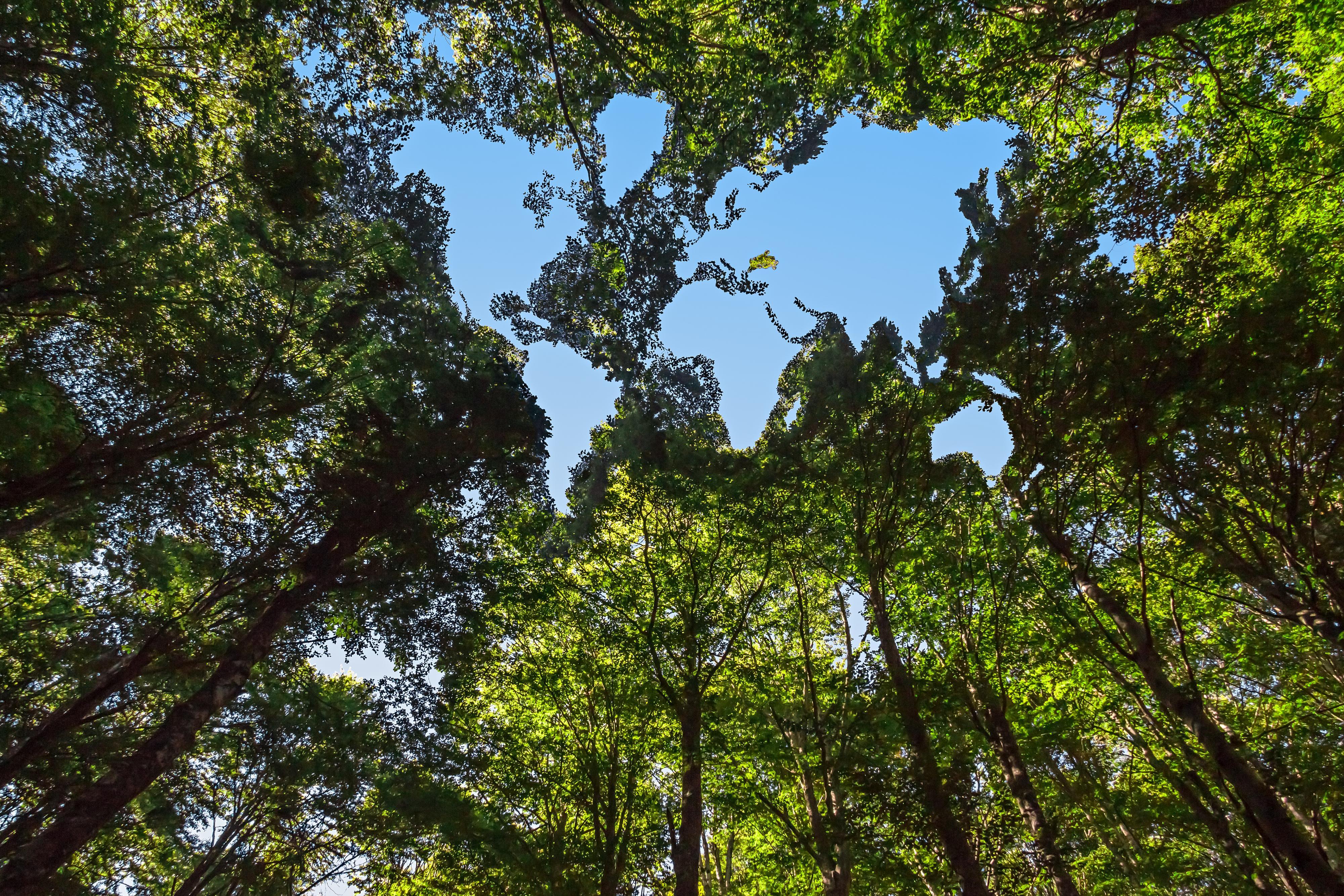 Metsä, jossa puiden latvuksiin muodostuu maailmankartta.